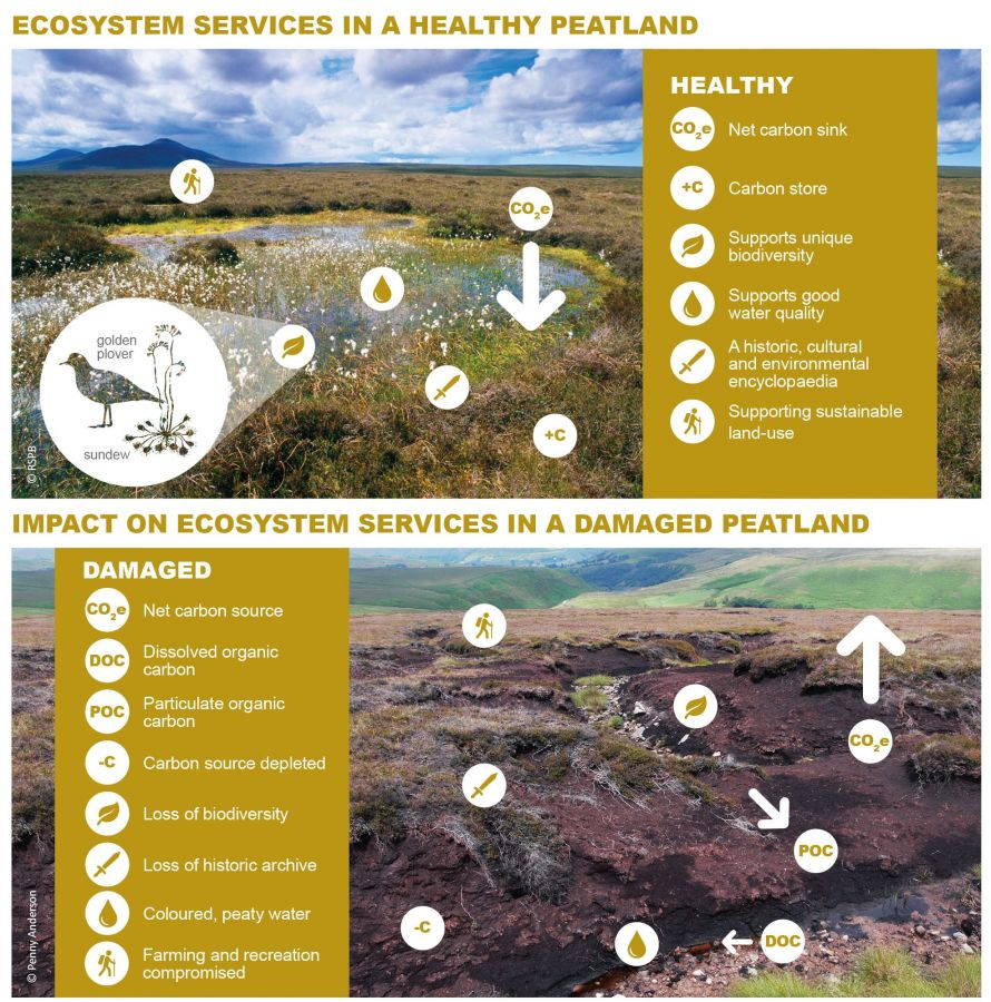 Ecosystem services in a healthy peatland