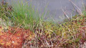Image of sphagnum in pool © Joe Holden