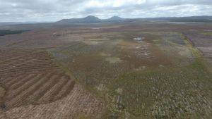 Afforested peatland restoration at Forsinard  © Neil Cowie/RSPB
