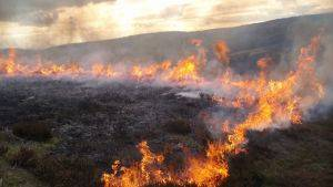 Managed burning of heather © North Pennines AONB
