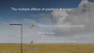 Multiple effects of peatland drainage