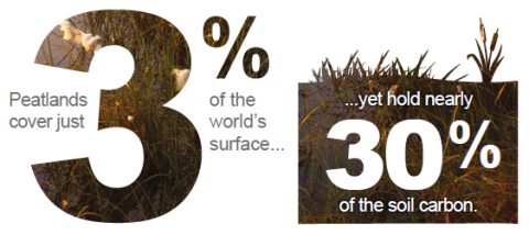 Peatlands cover 3% of the world's surface yet hold 30% of the soil carbon.