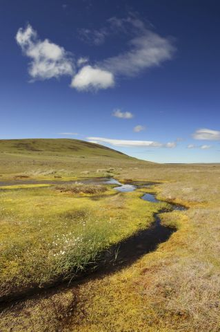 Dubh lochans and blanket bog at The Flows NNR near Forsinard, Caithness. June 2011 ©Lorne Gill/SNH/2020VISION