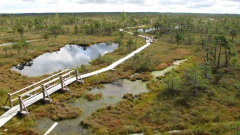 World Wetlands Day peatlands image