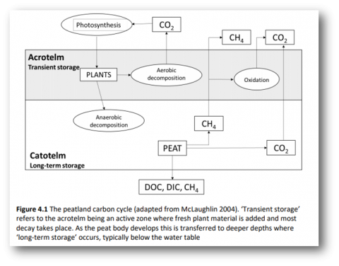 Carbon Storage and Sequestration by Habitat 2021 (NERR094), Fig. 4.1 Peatland Carbon cycle