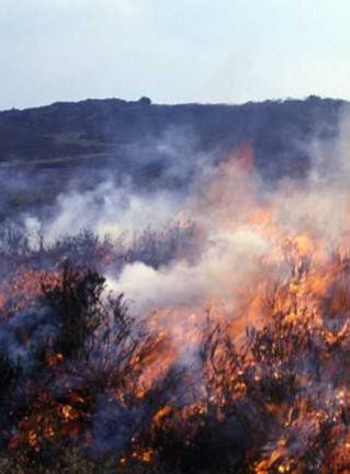 Moorland fire © Moors for the Future