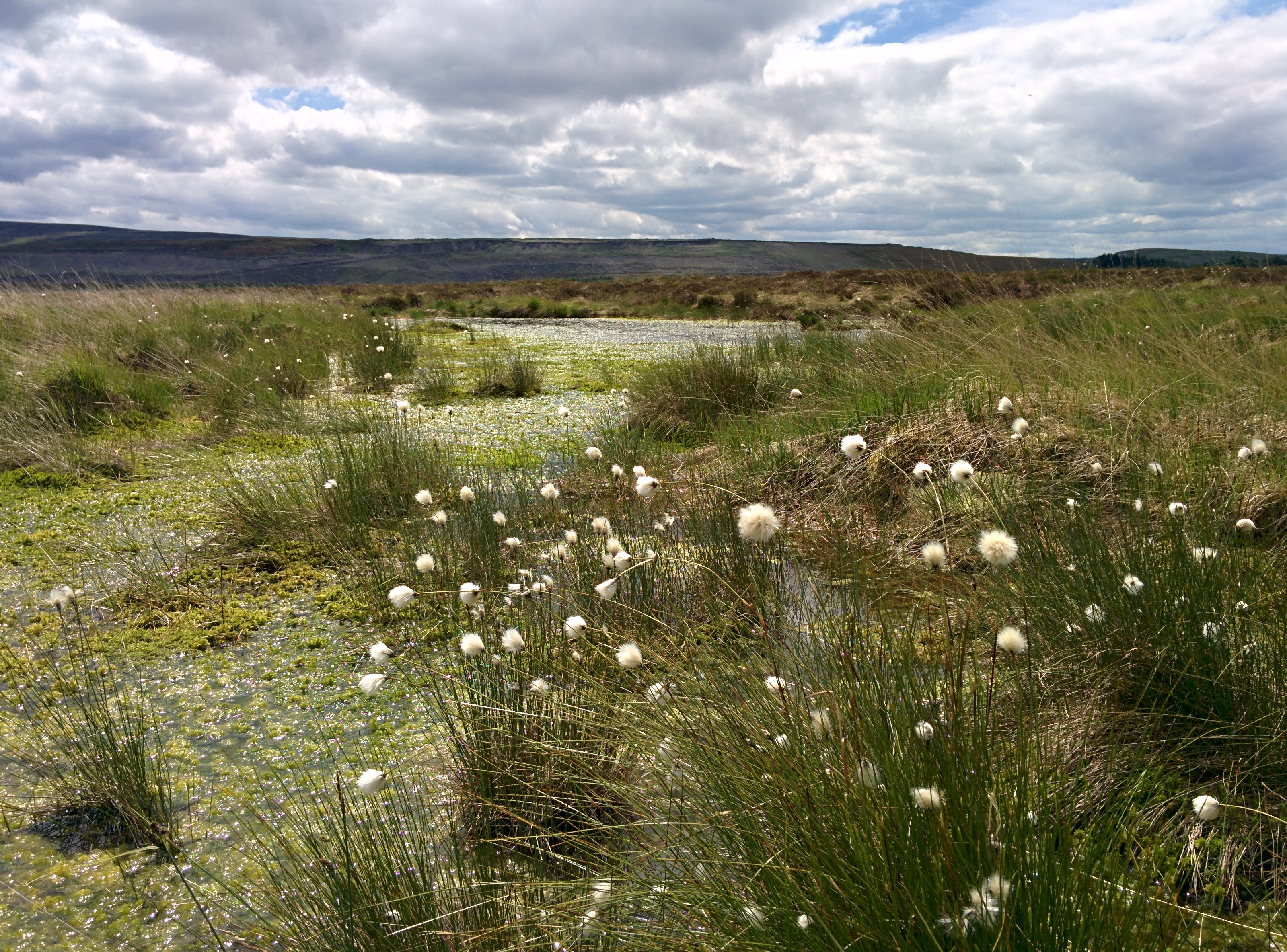 UK Peatland Restoration: Demonstrating Success