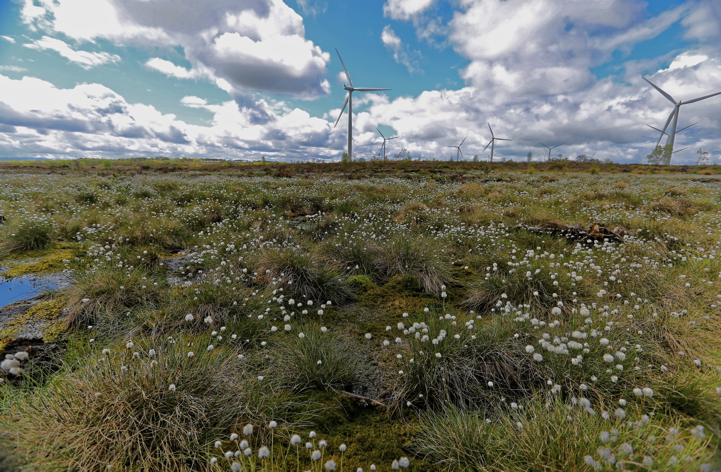 Ground smoothing on Black Law Windfarm - Credit Scottish Power Renewables