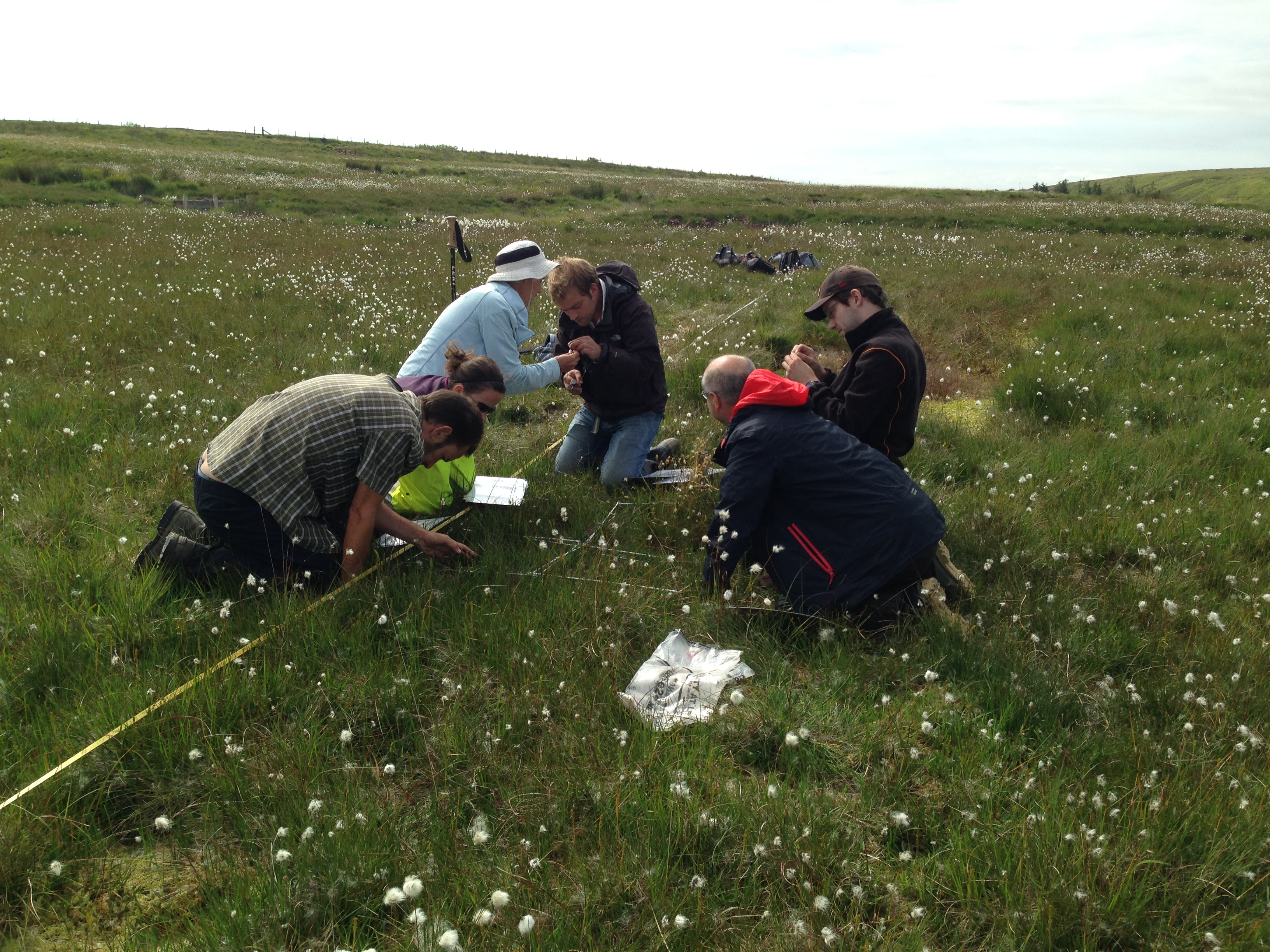 Vegatation Surveying- Credit Exmoor Mires Partnership