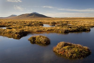Blanket bog in the Flow Country - Credit RSPB