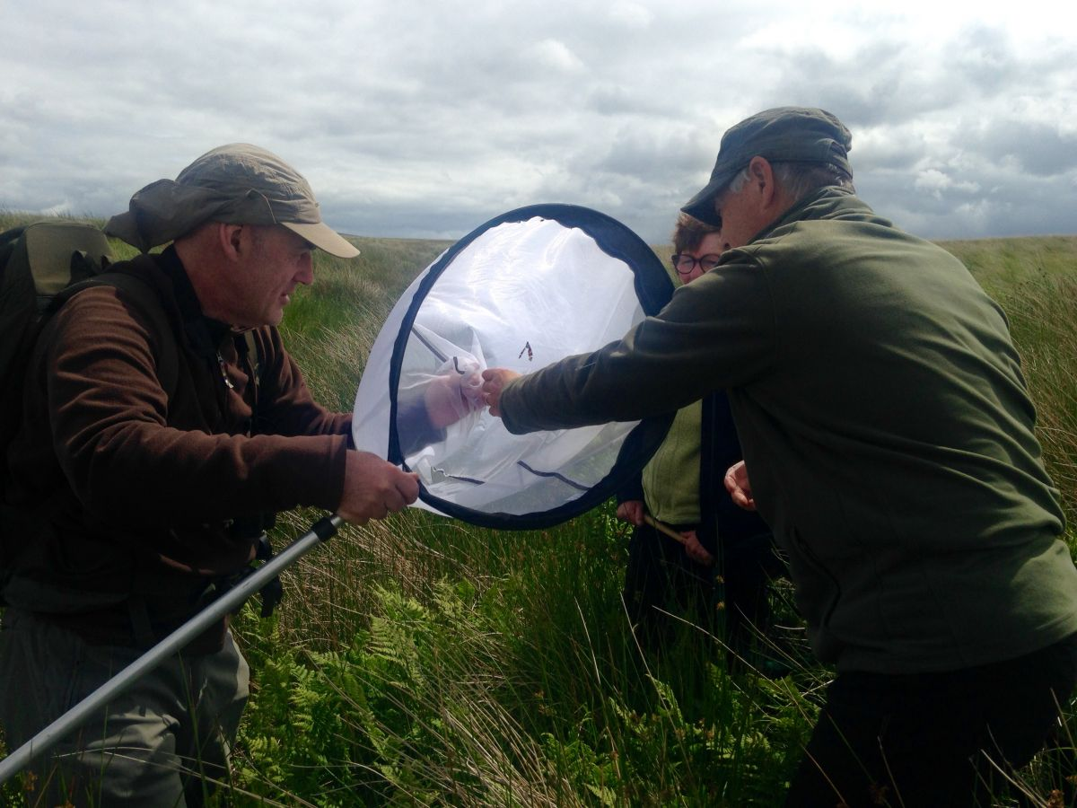 Volunteers surveying for large heath butterfly at Airds Moss