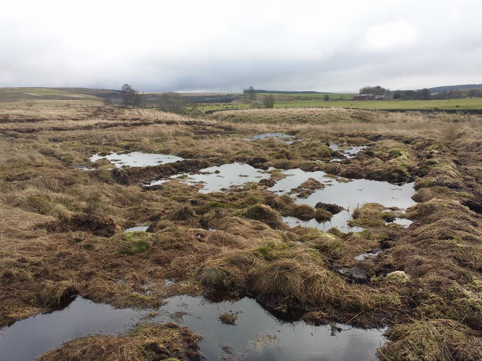 Cell bunding at Low Moss