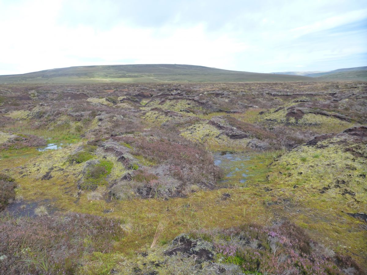 Restoration at Moor House Upper Teesdale NNR