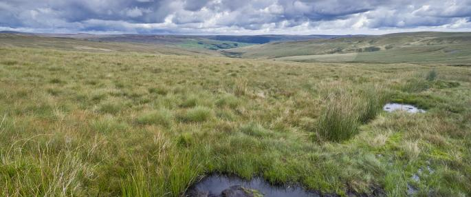 Working to restore Yorkshire's disappearing blanket bog